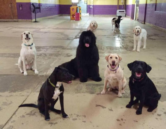 Doggie Daycare at Morgan's Paws Pet Care Center