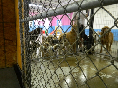Doggie Daycare at Morgan's paws Pet Care Center in York, PA