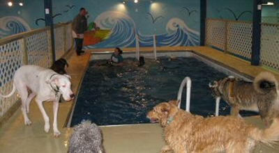 Indoor Dog Pools at Morgan's Paws Pet Care Center, York, PA
